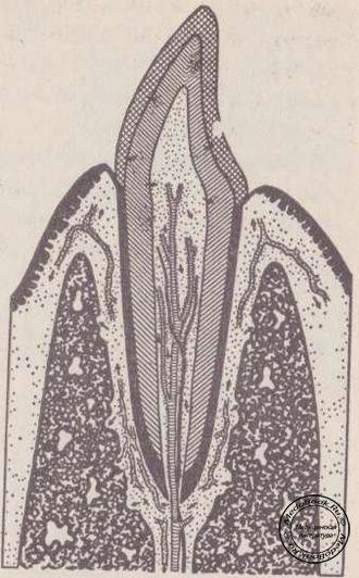 Схема лимфатической системы