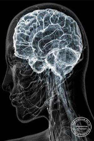Центральная нервная система человека представлена головным и спинным мозгом, а периферическая - нервными узлами...