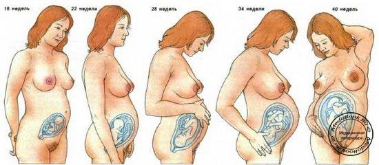 беременность по неделям: