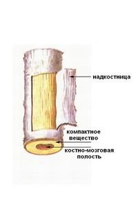Какие существуют особенности при проведении пластических операций на хрящах и костях